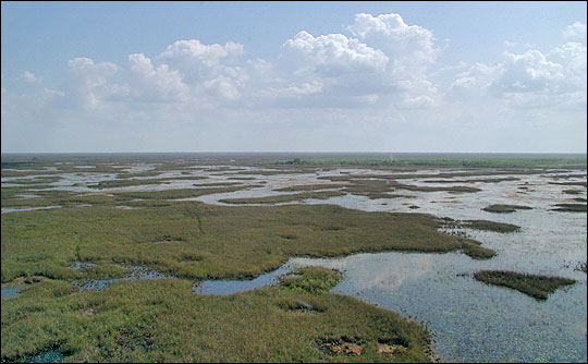 Don't let Florida take over wetlands permitting